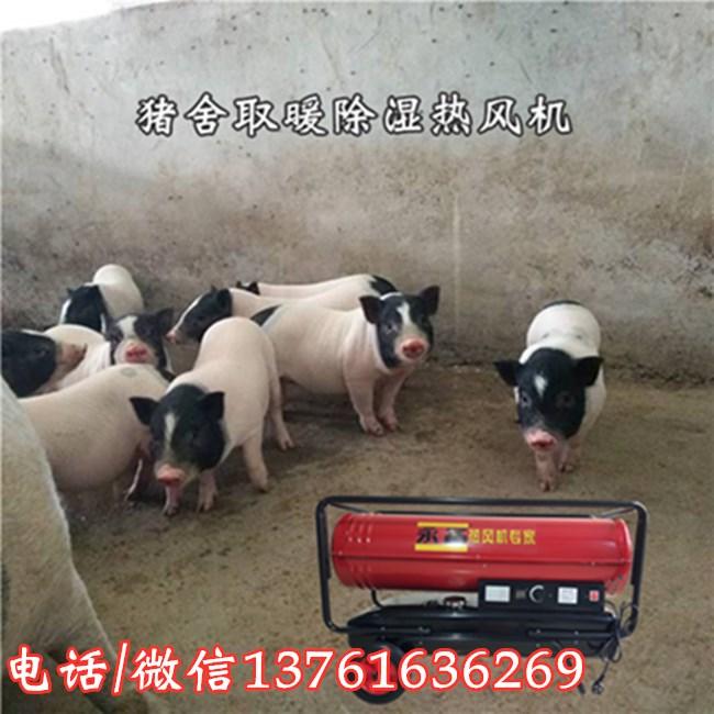 猪舍取暖除湿热风机